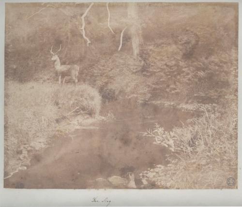 The Stag by John Dillwyn Llewelyn